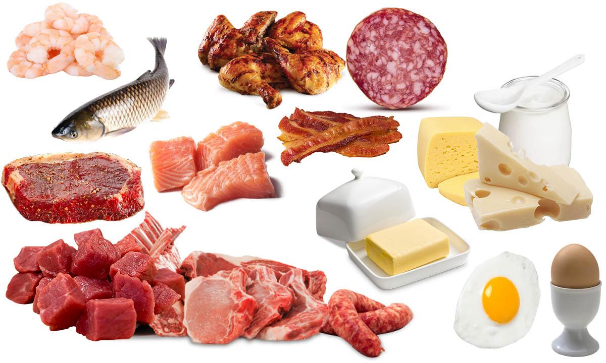 dieta carnivora