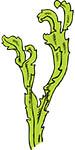 alge marine kelp