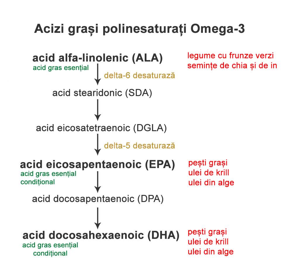 conversie Omega - 3 ALA in EPA si DHA